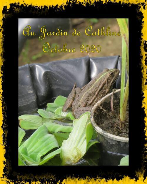 Au Jardin en octobre