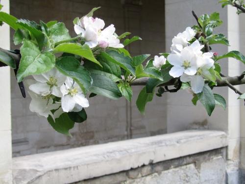 Plantes en vente libre