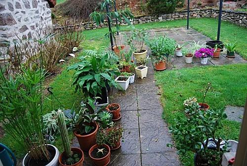 Plantes-d-interieur.jpg