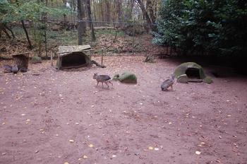 dierenpark amersfoort d50 2011 051