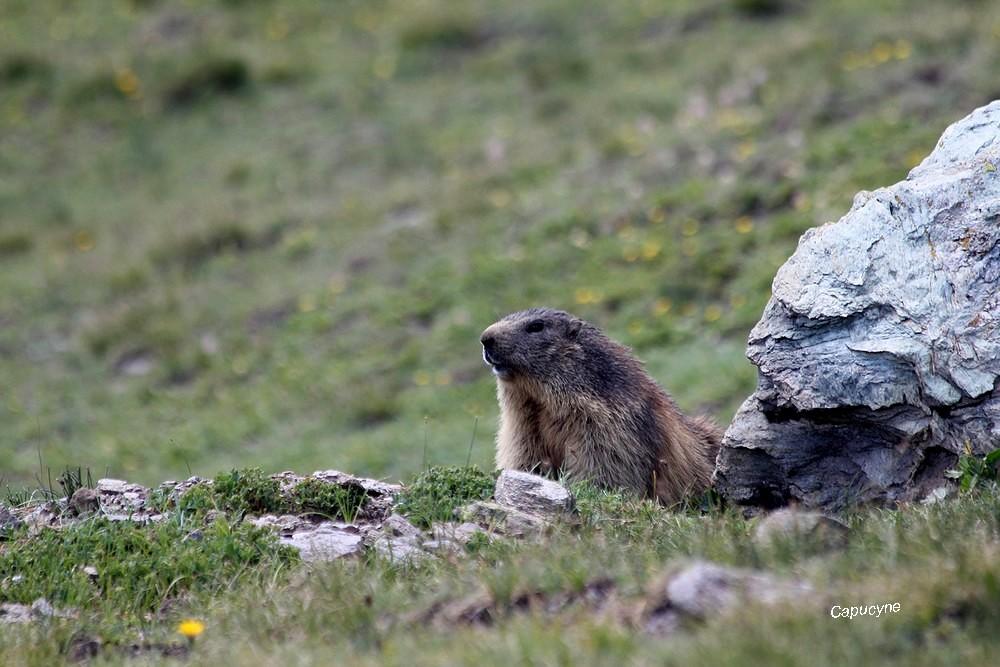 Haute-Maurienne 2019 : quand les lacs prennent de la hauteur...3