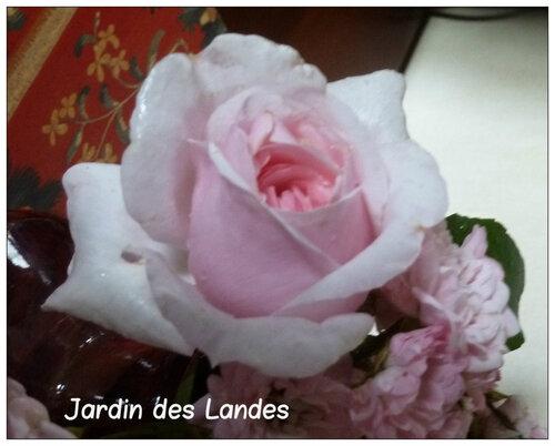 Les roses en juin 2017
