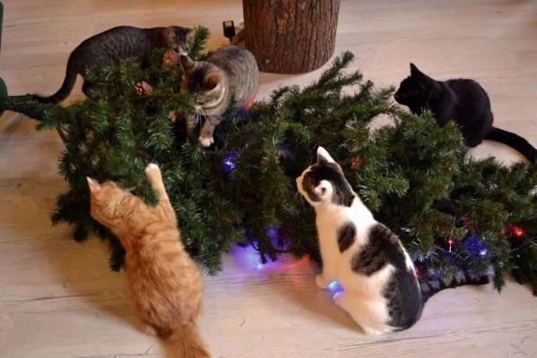 5 chats sapin