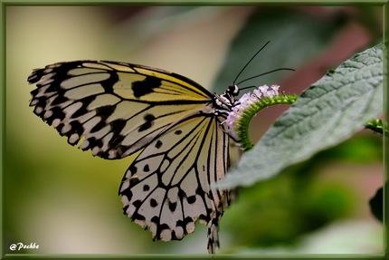 Papillons Exotiques !