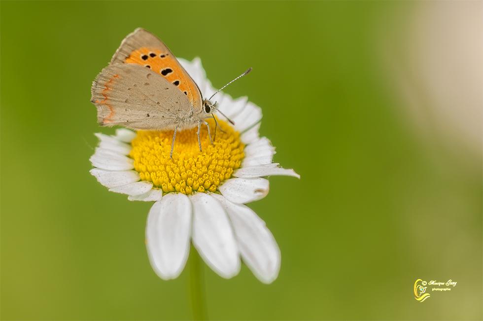 Papillon posé délicatement