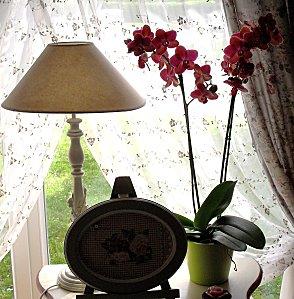 orchidees2.JPG