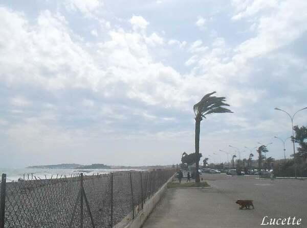Promenade éventée au bord de la mer