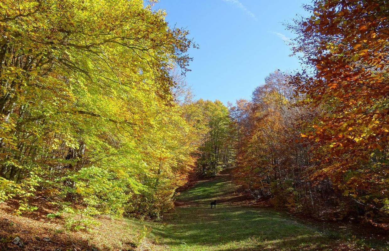 13 octobre 2017: L'automne en feu