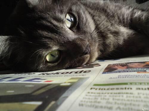 Les chats et le journal, encore