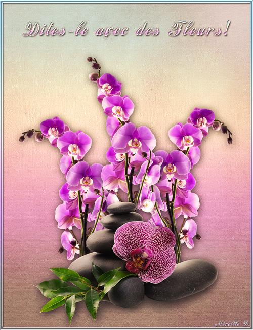 Montage Orchidées avec Photoshop