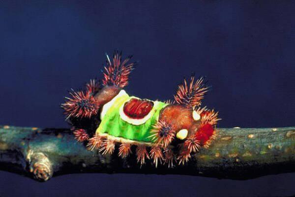 Insectes 2:  25 insectes terrifiantes