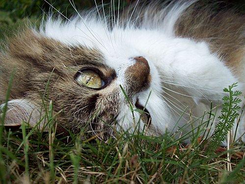 Maya couchée dans l'herbe4