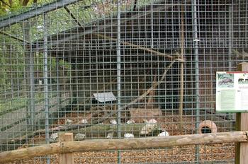 Parc animalier Bouillon 2013 enclos 241