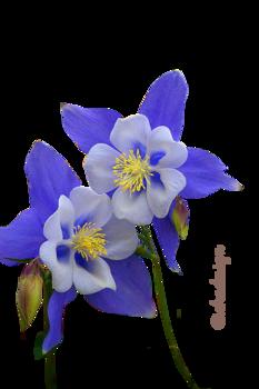 Virágok 8.