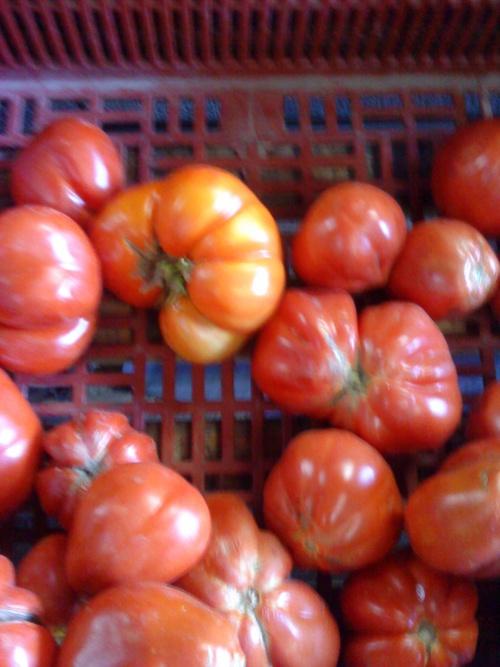 """tomates """"coeur de boeuf"""", la tomate appartient à la famille des solanacées"""