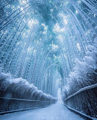 La délicatesse de la neige au Japon ...