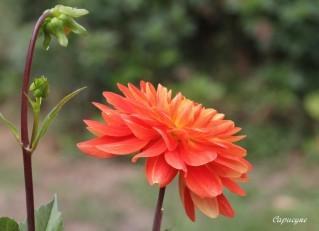 jardin-de-septembre 8306