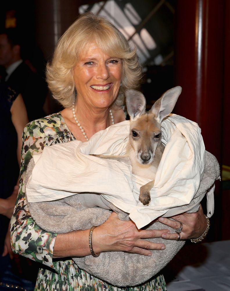Camilla et son kangourou
