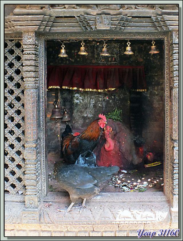 Blog de images-du-pays-des-ours : Images du Pays des Ours (et d'ailleurs ...), Volailles opportunistes: elles se régalent d'offrandes à base de nourriture - Bungamati - Népal