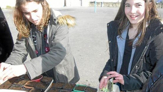 Ici, un éco-ateliers de semis de plantes aromatiques et de fleurs en godets.