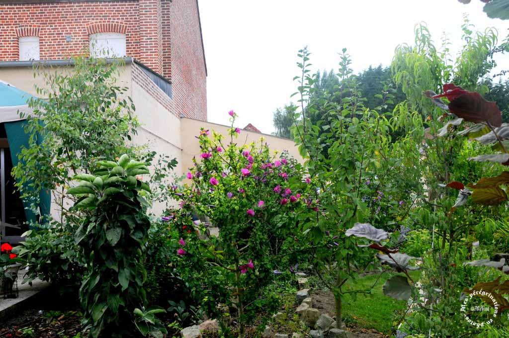 Mon jardin (4)