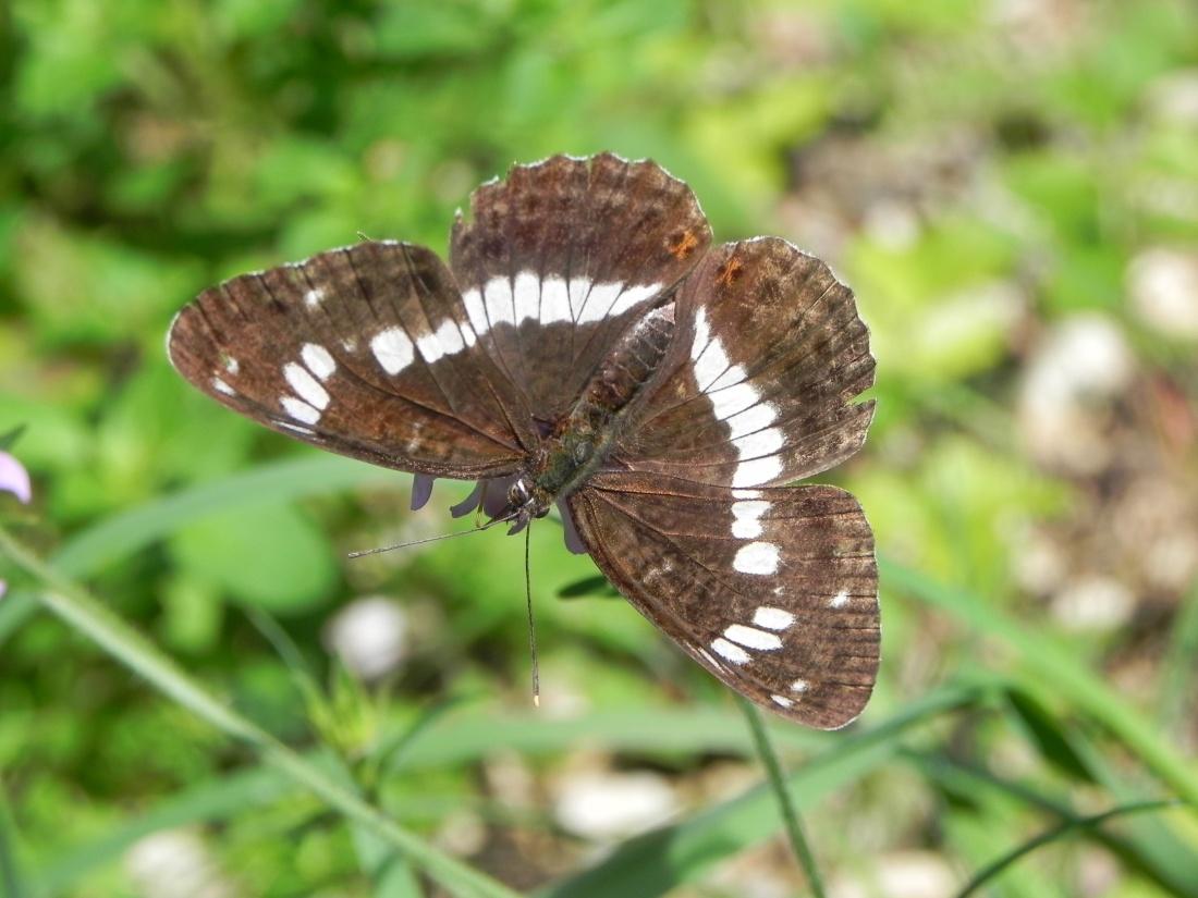 le bourdon et le papillon