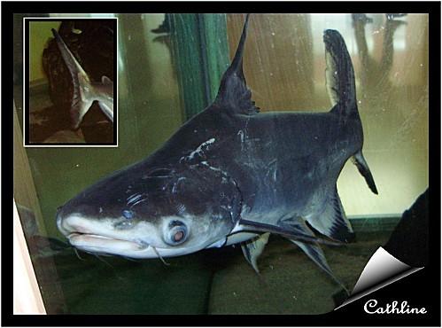 poisson à identifier