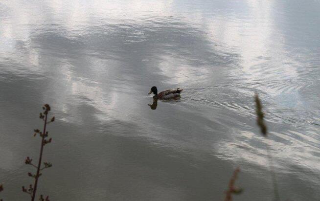 Au lac de St Denis du Maine (9)