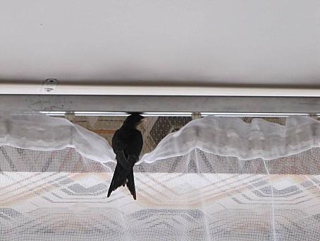 les-oiseaux-et-autres-volatiles 6647