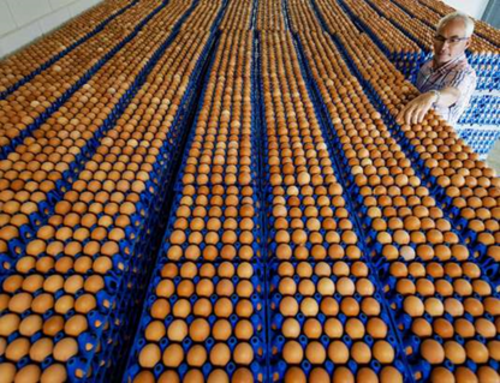 Le scandale des œufs contaminés au friponil