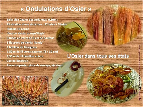 2013 02 ondulation osier (1)