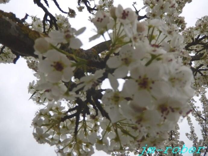 Enfin le printemps nous dévoile ses belles couleurs