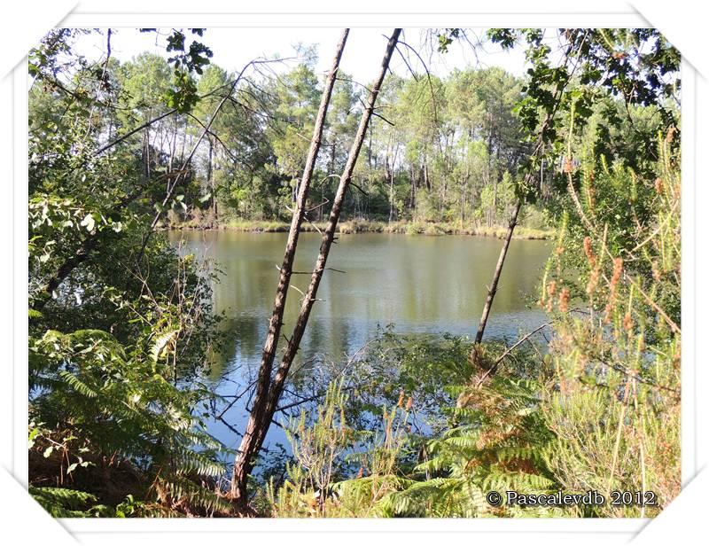 Les lacs de Lamothe, Bernadas et grand Bernadas - 7/7
