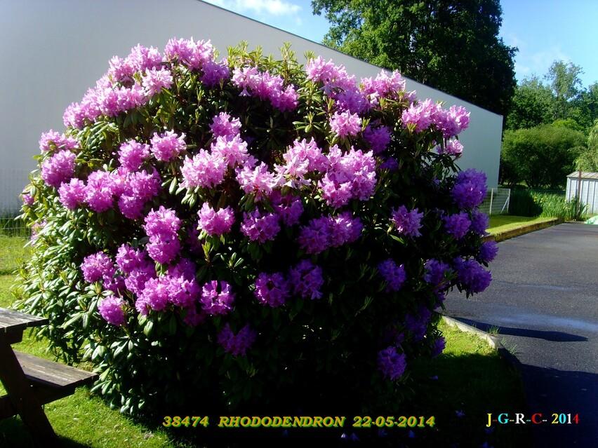 FLEURS    06/06/2014