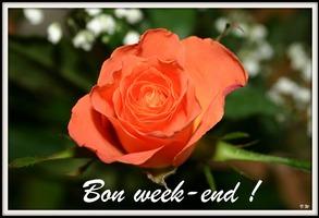 """Résultat de recherche d'images pour """"bon week end rose image"""""""