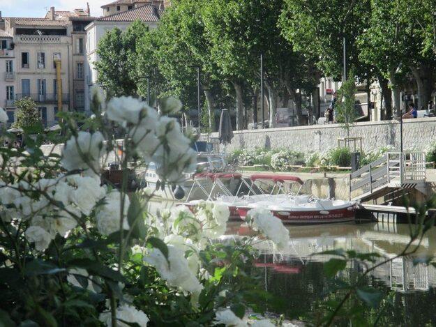 Les roses de Jacques Bascou