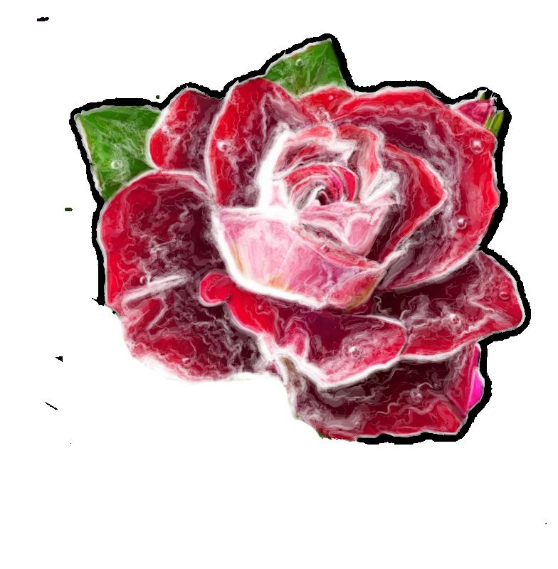 Exercices sur tube du net : roses 1