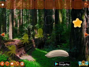 Jouer à Escape from golden bee forest