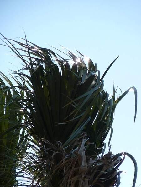 Jardin de Magalone reflets palmier (3)