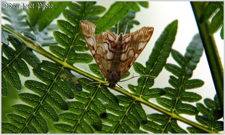 Z'autres... Papillons