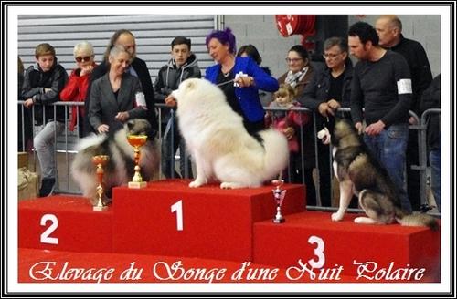 Exposition canine de Castres (25 mars 2018)