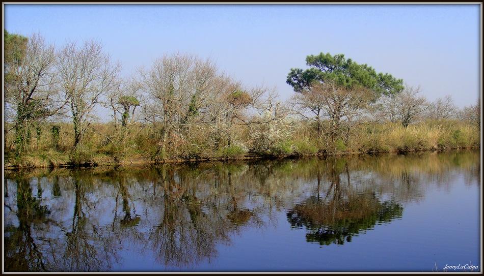 Parc ornithologique du Teich II