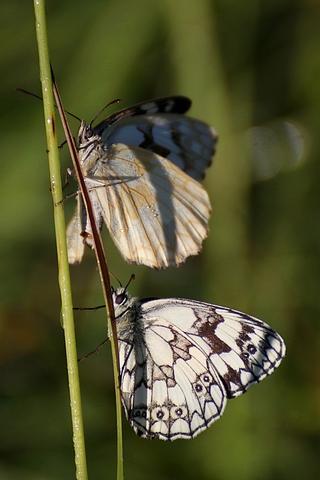 Des papillon et des perles de rosée