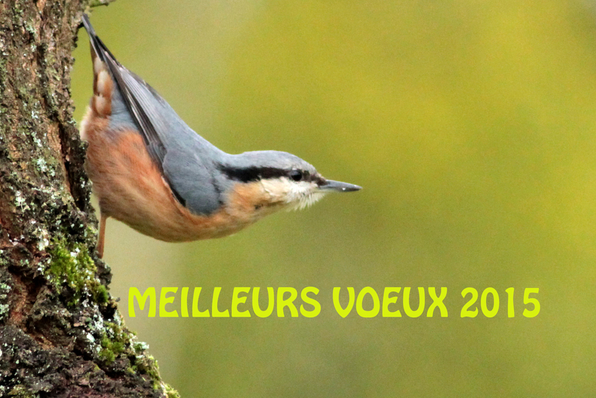 MEILLERS VOEUX 2015
