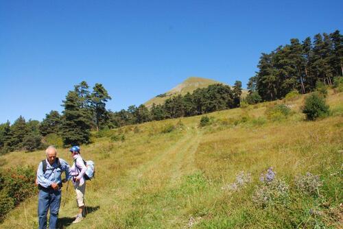 Au détour du bois, le Puy de Manse apparait