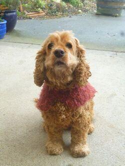 Manteau pour Lola.