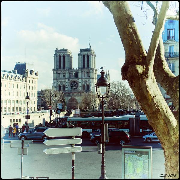 Le Goéland de Notre-Dame