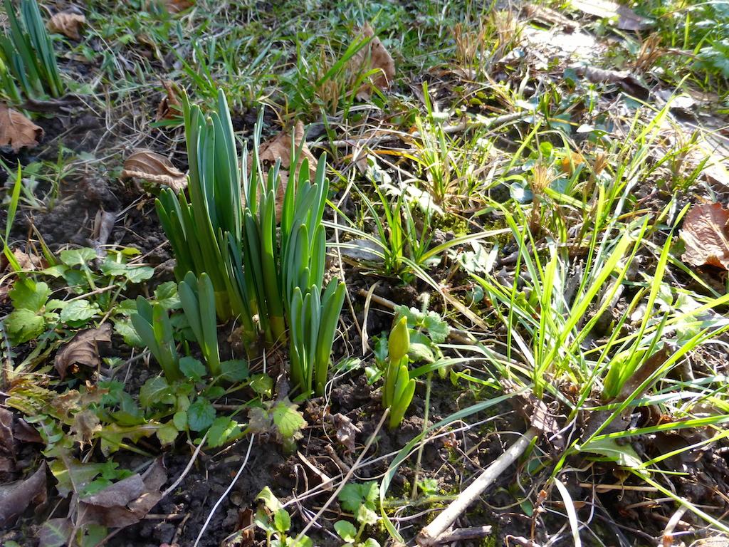 Quelques fleurs d'hiver ou qui se préparent pour le printemps!