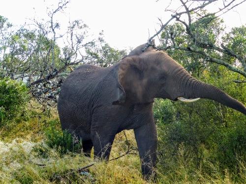 la patrouille des éléphants