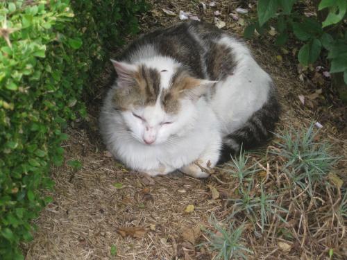 Maison normande et puits au chat